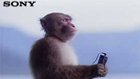 Sony meditating monkey